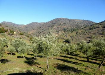 Thumbnail Farm for sale in 62 Ha With Olivegrove, Almond Trees And Forest. Portugal, Bragan, Alfândega Da Fé (Parish), Alfândega Da Fé, Bragança, Norte, Portugal