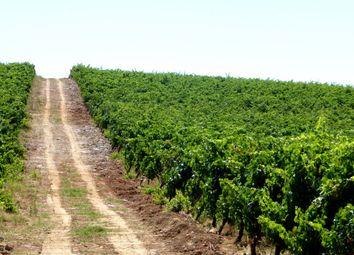 Thumbnail Farm for sale in Wine Estate In Borba, Évora, Alentejo, Portugal