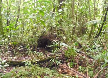 Thumbnail Farm for sale in Land In Pond Casse, Pond Casse, Dominica