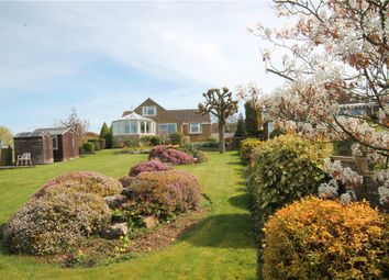 Thumbnail 3 bed detached bungalow for sale in Bath Road, Sturminster Newton