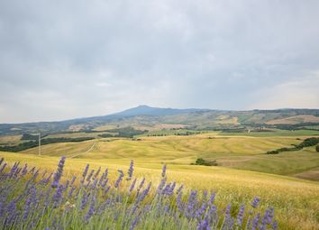 Thumbnail Farm for sale in Azienda Agricola Triticum, Sarteano, Siena, Tuscany, Italy