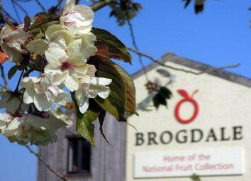 Thumbnail Property to rent in Brogdale Road, Ospringe, Faversham