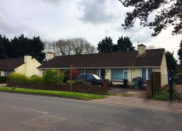 Thumbnail 3 bed bungalow to rent in Borough Road, Paignton