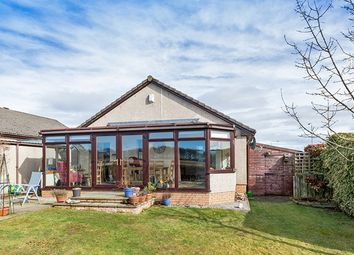 Thumbnail 4 bed bungalow for sale in Roman Road, Westmuir, Angus