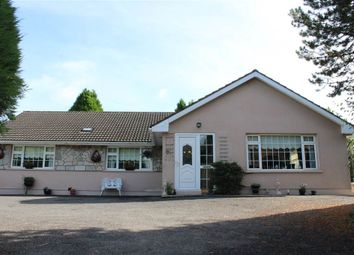 Thumbnail 4 bed bungalow for sale in ''hill View'' 41 Commons Hall Road, Newry
