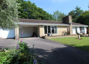 Thumbnail 3 bed bungalow for sale in West Hill, Ottery St. Mary
