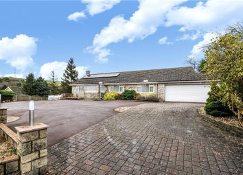 Thumbnail 4 bedroom detached bungalow to rent in Askerswell, Dorchester