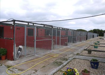 Thumbnail 2 bed property for sale in Kennels, Cattery & Equestrian Businesses DN37, Brigsley, North Lincolnshire
