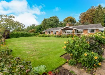 Thumbnail 4 bedroom detached bungalow for sale in Priory Road, Palgrave, Diss