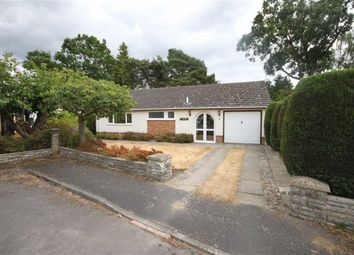Thumbnail 2 bed detached bungalow to rent in Shirley Close, West Moors, Ferndown
