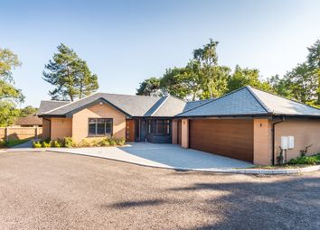 Thumbnail 4 bed detached bungalow for sale in Ashley Heath, Ringwood, Hampshire