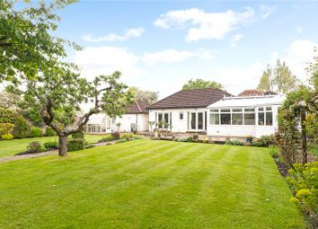 Thumbnail 4 bed detached bungalow for sale in Downside Common, Downside, Cobham, Surrey