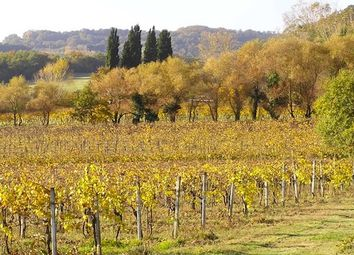 Thumbnail 4 bed country house for sale in Casale La Barricaia, San Gimignano, Siena, Tuscany, Italy