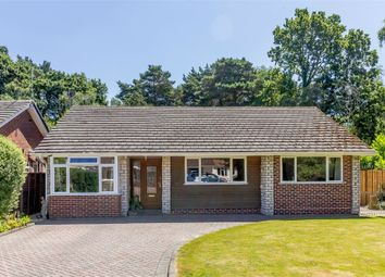 Thumbnail 4 bed detached bungalow for sale in Apple Tree Grove, Ferndown, Dorset