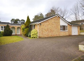 Thumbnail 4 bedroom detached bungalow for sale in The Spinney, Camberley, Surrey