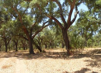 Thumbnail Land for sale in Land 54 Ha, Cabrela, Montemor-O-Novo, Évora, Alentejo, Portugal