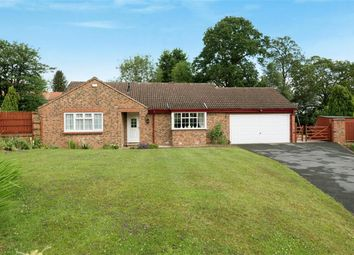 Thumbnail 3 bed detached bungalow for sale in Kings Mead, Ripon