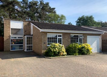Thumbnail 3 bed detached bungalow to rent in Ivy Close, St. Leonards, Ringwood
