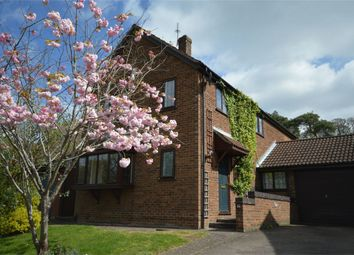 Thumbnail 4 bed detached house for sale in Bishops Close, Thorpe St Andrew, Norwich