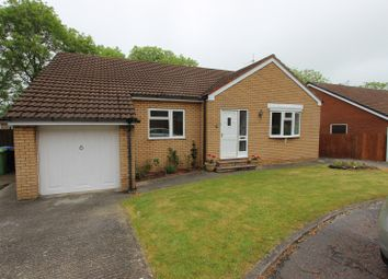 Thumbnail 4 bed detached bungalow to rent in Foresters Path, School Aycliffe, Newton Aycliffe