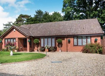 Thumbnail 3 bed bungalow for sale in Salhouse, Norwich, Norfolk
