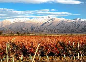 Thumbnail Land for sale in Mendoza, Uco Valley, Argentina