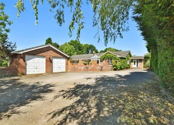 Thumbnail 4 bed detached bungalow for sale in Horsham Road, Capel, Dorking, Surrey