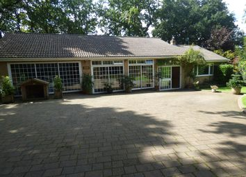 Thumbnail 4 bed detached bungalow for sale in Higher Blandford Road, Corfe Mullen