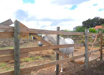 Thumbnail Farm for sale in Close To Ourique, Garvão E Santa Luzia, Ourique, Beja, Alentejo, Portugal
