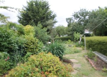 Thumbnail Semi-detached house to rent in Mile End Road, Colchester, Essex