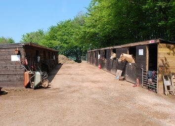 Thumbnail Equestrian property for sale in Stoodleigh, Tiverton