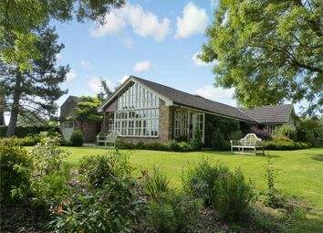 Thumbnail 4 bed detached bungalow for sale in St Margarets, Great Gaddesden, Hertfordshire