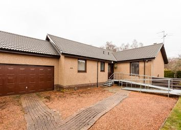 Thumbnail 4 bed bungalow for sale in Kenworthy Avenue, Scone, Perth