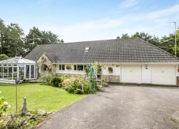 Thumbnail 4 bed bungalow for sale in Ashley Heath, Ringwood, Hampshire