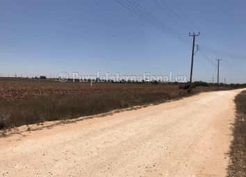 Thumbnail Land for sale in Avgorou, Cyprus