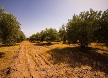 Thumbnail Land for sale in Marrakesh, 40000, Morocco