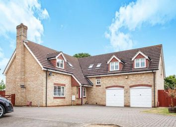 Thumbnail 5 bedroom equestrian property for sale in Wimblington, March, Uk