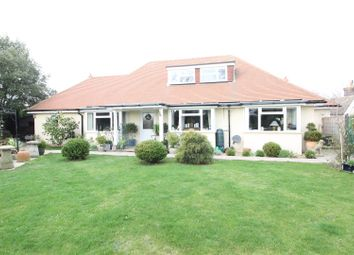 Thumbnail 5 bed detached bungalow for sale in Chestnut Walk, Bexhill-On-Sea