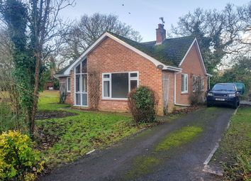 Thumbnail 3 bedroom detached bungalow to rent in Beccles Road, Burgh St. Peter, Beccles