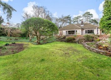 Thumbnail 5 bed detached bungalow for sale in Upper Chobham Road, Camberley, Surrey