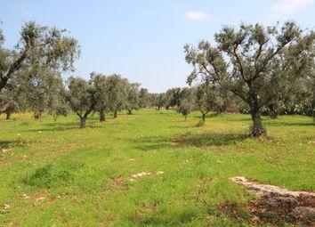 Thumbnail Land for sale in San Vito Dei Normanni, San Vito Dei Normanni, Brindisi, Puglia, Italy