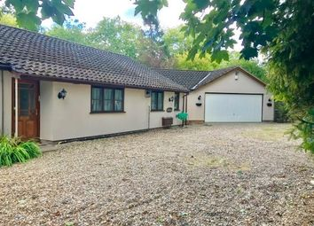 Thumbnail 4 bed bungalow to rent in The Park, Bury St. Edmunds