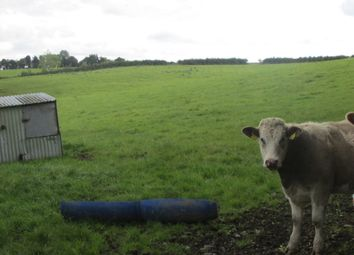 Thumbnail Property for sale in Lattinalbany, Carrickmacross, Monaghan