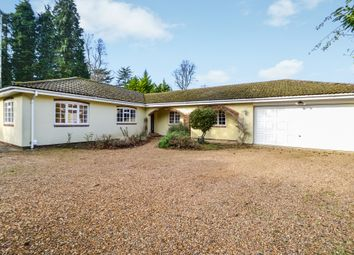 Thumbnail 3 bed detached bungalow to rent in Green Lane, Cobham