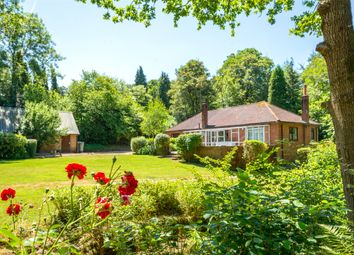 Thumbnail 4 bed bungalow for sale in Weare Street, Ockley, Dorking, Surrey