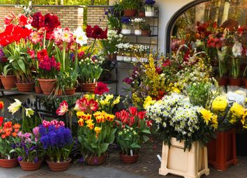 Thumbnail Retail premises for sale in Florist HG1, North Yorkshire