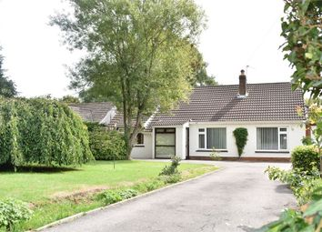 Thumbnail 3 bed detached bungalow to rent in Coleford Road, Tutshill, Chepstow