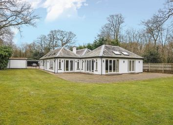 Thumbnail 4 bed detached bungalow to rent in London Road, Windlesham