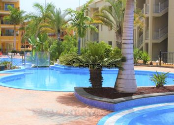 Thumbnail 1 bed apartment for sale in Palm Mar, Arona, Tenerife, Canary Islands, Spain
