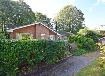 Thumbnail 4 bed bungalow for sale in Birch Grove, West Hill, Ottery St Mary, Devon
